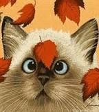 Autumn cat.jpg