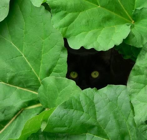 Bug in leaves.jpg