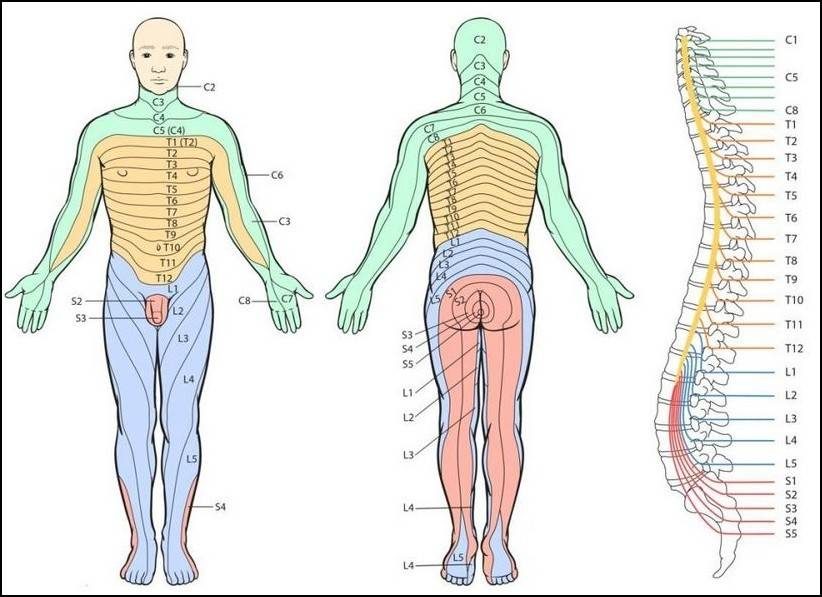 Dermatome map for spinal pain | Joint Replacement Patient Forum on