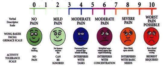 facial grimace scale.JPG