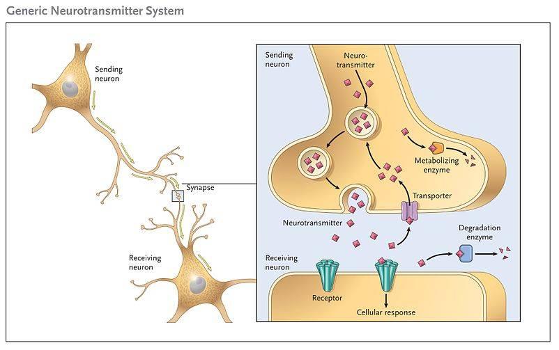 Generic_Neurotransmitter_System.jpg