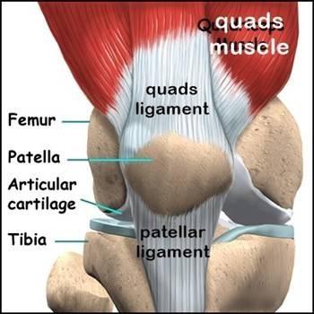 knee anatomy anaterior.jpg