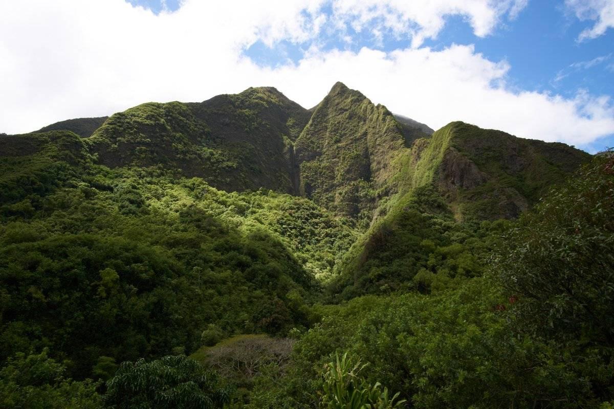 Maui-2019-015 copy.jpg