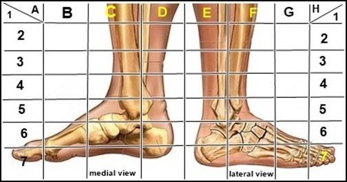 medial view foot-horz.jpg