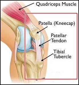 tibial tubercle and patellar tendon.JPG