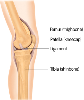 knee anatomy (courtesy Smith & Nephew)