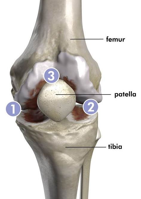 Compartments of the Knee (image courtesy of ConforMIS)